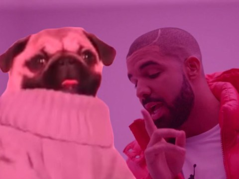Someone dressed their pug as Drake and made it dance to Hotline Bling