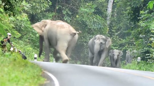 Elephants do not like motorbikes, as is evident from this