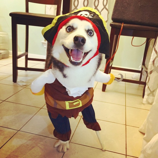 three legged dog nails Halloween costume