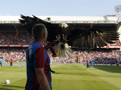 Man arrested on suspicion of violent disorder after trying to punch Crystal Palace's bald eagle mascot