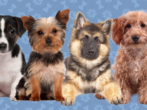 Quiz: What dog breed are you?