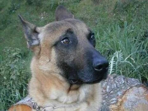 Paris attacks hero dog awarded for his bravery