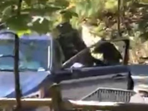 Thief breaking into a car in Tenessee turned out to be a bear