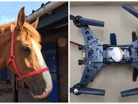 Police hunt owner of drone 'that caused death of police horse'