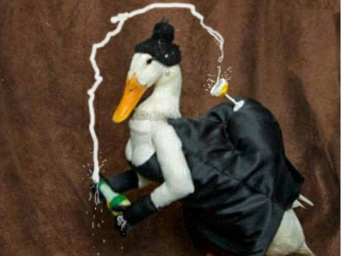 Guus the duck has a bit of a thing for fancy dress