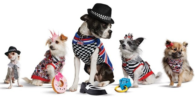 gwen stefani pet clothing line dogs