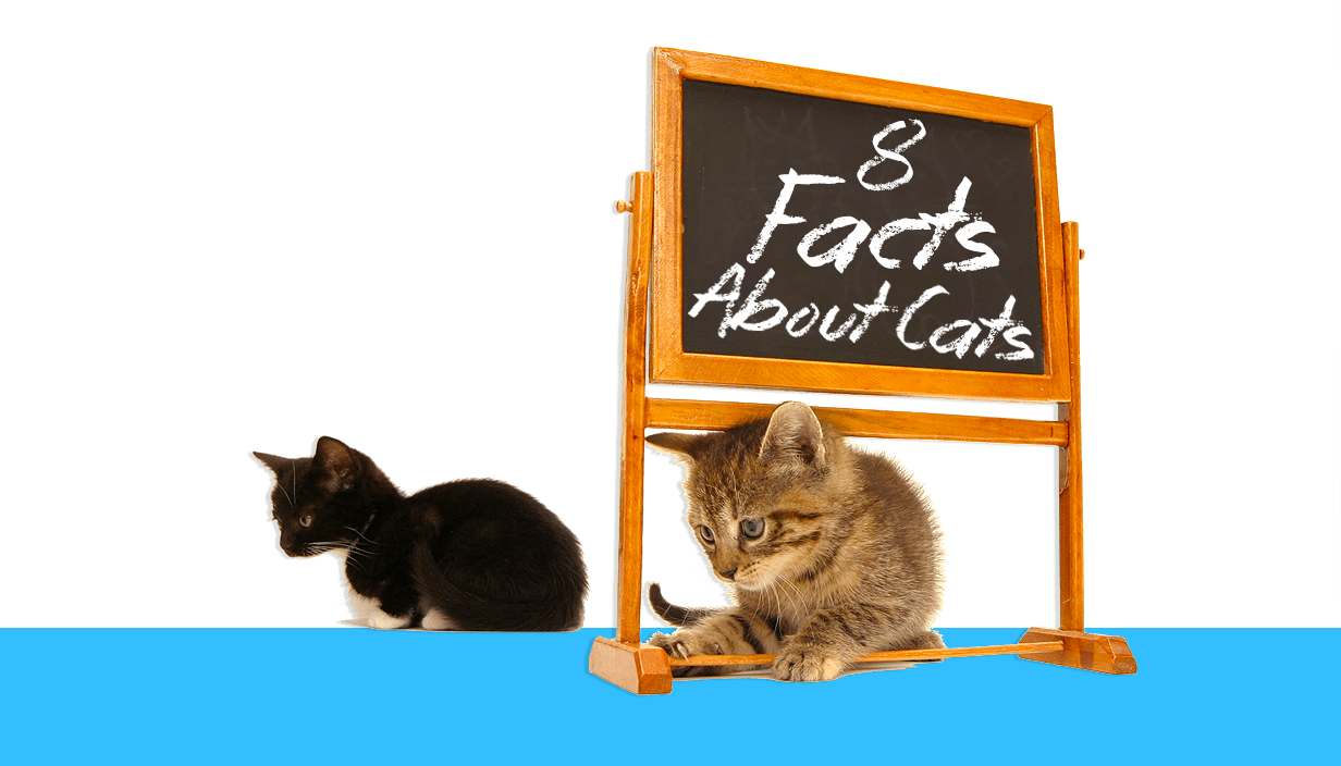 7 questions about cats you\u0027ve always wanted to know the