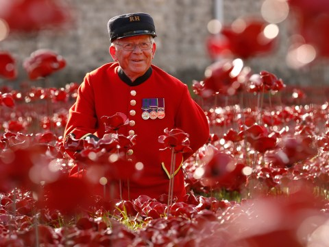Remembrance Day 2015: Striking poppy pictures from across the years