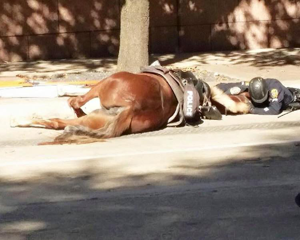 "A Houston Police Department horse that was spooked by traffic noise died after being hit by a moving cement truck. The accident happened about 10:15 a.m. Thursday in the 200 block of Fannin at Congress, said HPD spokeswoman Jodi Silva. Charlotte, a 6-year-old Tennessee Walker ridden by Officer D. Herrejon, was southbound in the center lane when a noise from behind startled her, Silva said. The horse turned to the side and backed into the front grill of a passing concrete truck in the next lane, she said. ""Her back legs were severely injured and she was put to sleep at the scene,"" Silva said. The truck driver did not appear to be at fault, police said."