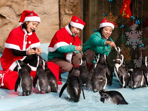 Do enjoy these animals at the zoo celebrating Christmas early