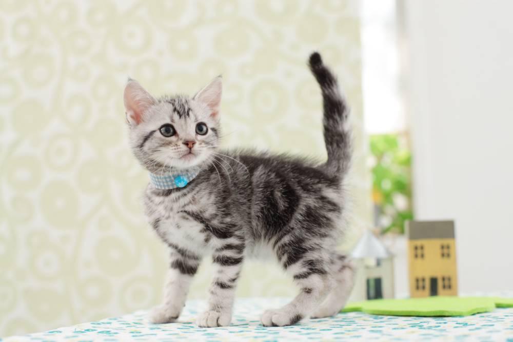 Woman orders dream purebred kitten online, gets a dead cat instead
