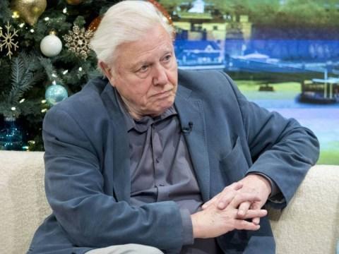 Sir David Attenborough admits he has no idea what the Premier League is