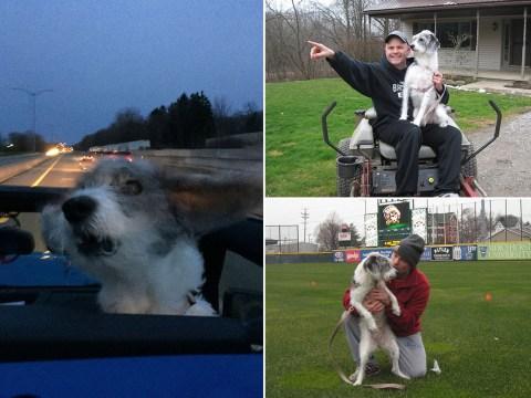 Terminally ill dog fulfills her bucket list