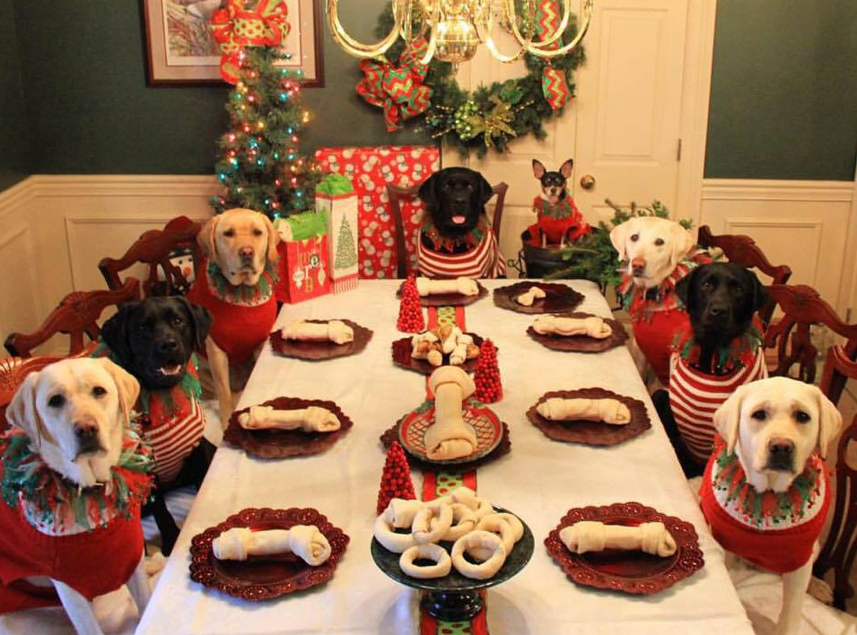 kelly furr dogs at christmas dinner table
