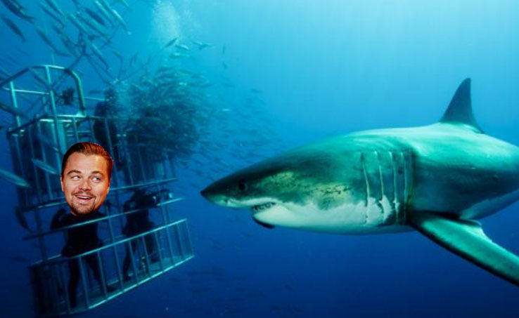 Leonardo DiCaprio nearly got eaten by a shark: 'A great white jumped into my cage'