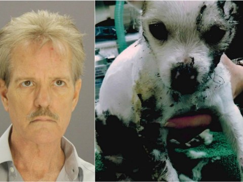 Puppy died after being burned alive by owner 'as punishment' for nipping him