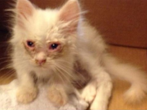 Cat abandoned on the side of the road fulfills his dreams of becoming a massive ball of fluff
