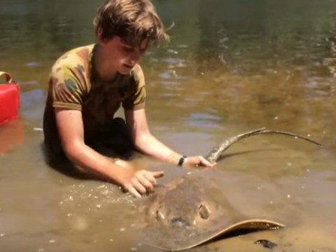 Young boy, aged 12, helps stingray give birth to 12 babies