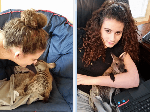 Wallaby joins teen girl at school and basketball games to help battle her anxiety