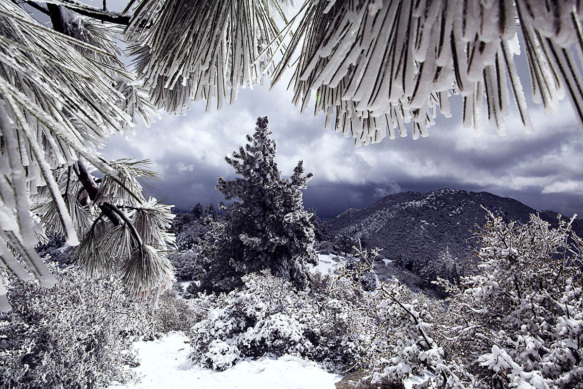 19 pictures that will make you feel things about winter