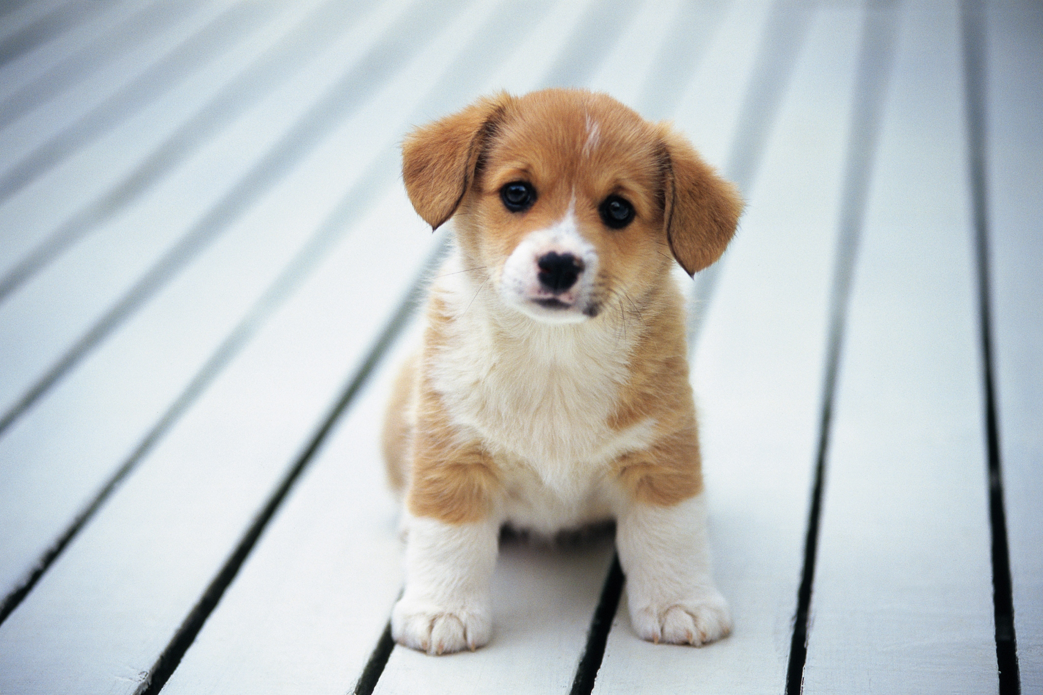 13 reasons puppies are better than people