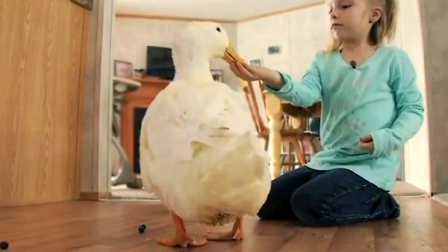 This little girl's best friend is a duck and it's the cutest thing you'll ever see