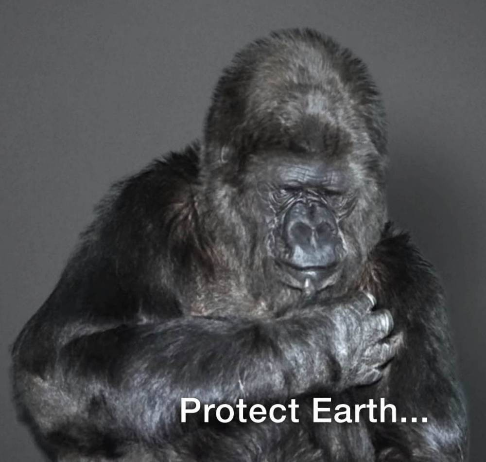 Koko the gorilla's New Year message that we should all listen to