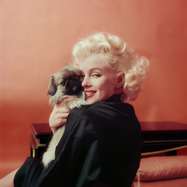 Marilyn Goes Oriental With A Pekenese Dog, NY, 1955 Credit: Milton H Greene/Archive Images