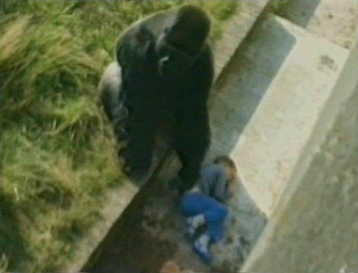 1245558 Jambo the gorilla stands guard over fallen child in 1986