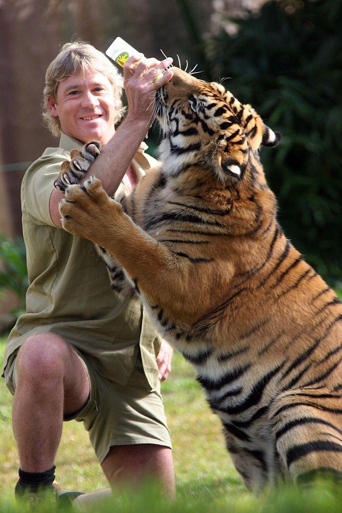 'Hot and bothered' tiger mauls keeper at Steve Irwin's zoo