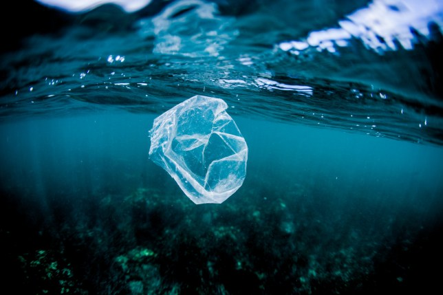 Plastic bag floating over reef in the ocean, Costa Rica