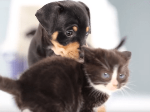 WATCH: Kittens meet puppies for the first time and all is well in the world again