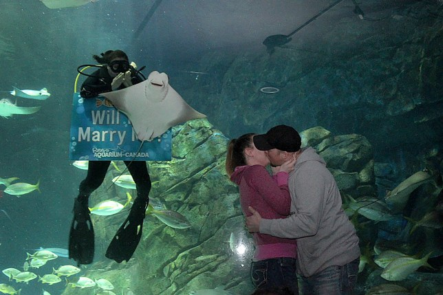 PIC FROM TAYLOR MCKAY / CATERS NEWS - (PICTURED: The cheeky stingray photobombs every photograph of the most special moment of Taylors life.) - This is the hilarious moment one mans romantic proposal got upstaged by a STINGRAY,When Chris Hammer, 38, decided to get down on one knee and propose to his fiancee Taylor Mckay, 26, he ramped up the romance and organised an underwater proposal in an aquarium. But the last thing he expected was a photobombing stingray to muscle its way in on the passionate proposal. SEE CATERS COPY.