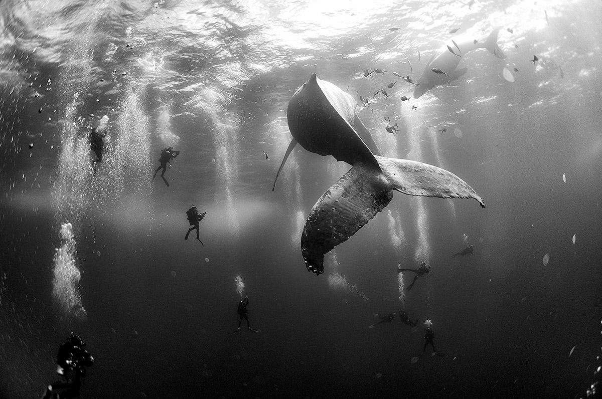 15 stunning 2016 World Press Photo Contest winners