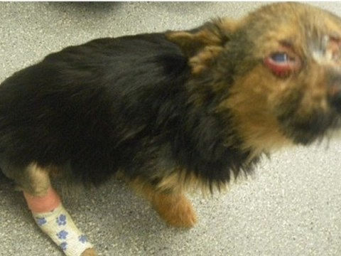 Half a million sign petition to introduce animal cruelty register