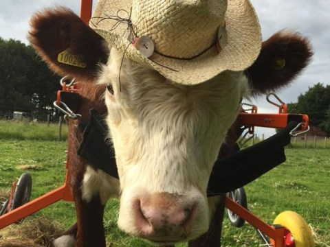 Appeal to find new sanctuary for rescued disabled farm animals