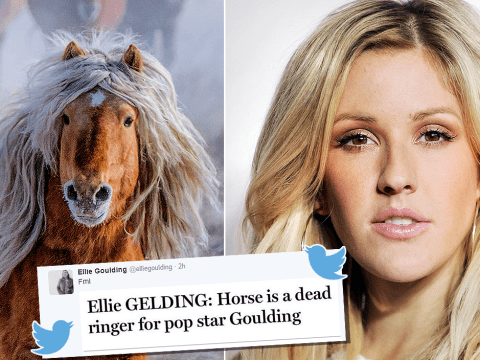 Yes, Ellie Goulding knows about that horse lookalike picture