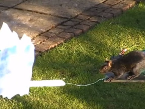 Man builds intense obstacle course for squirrels in his back garden, inspires us all