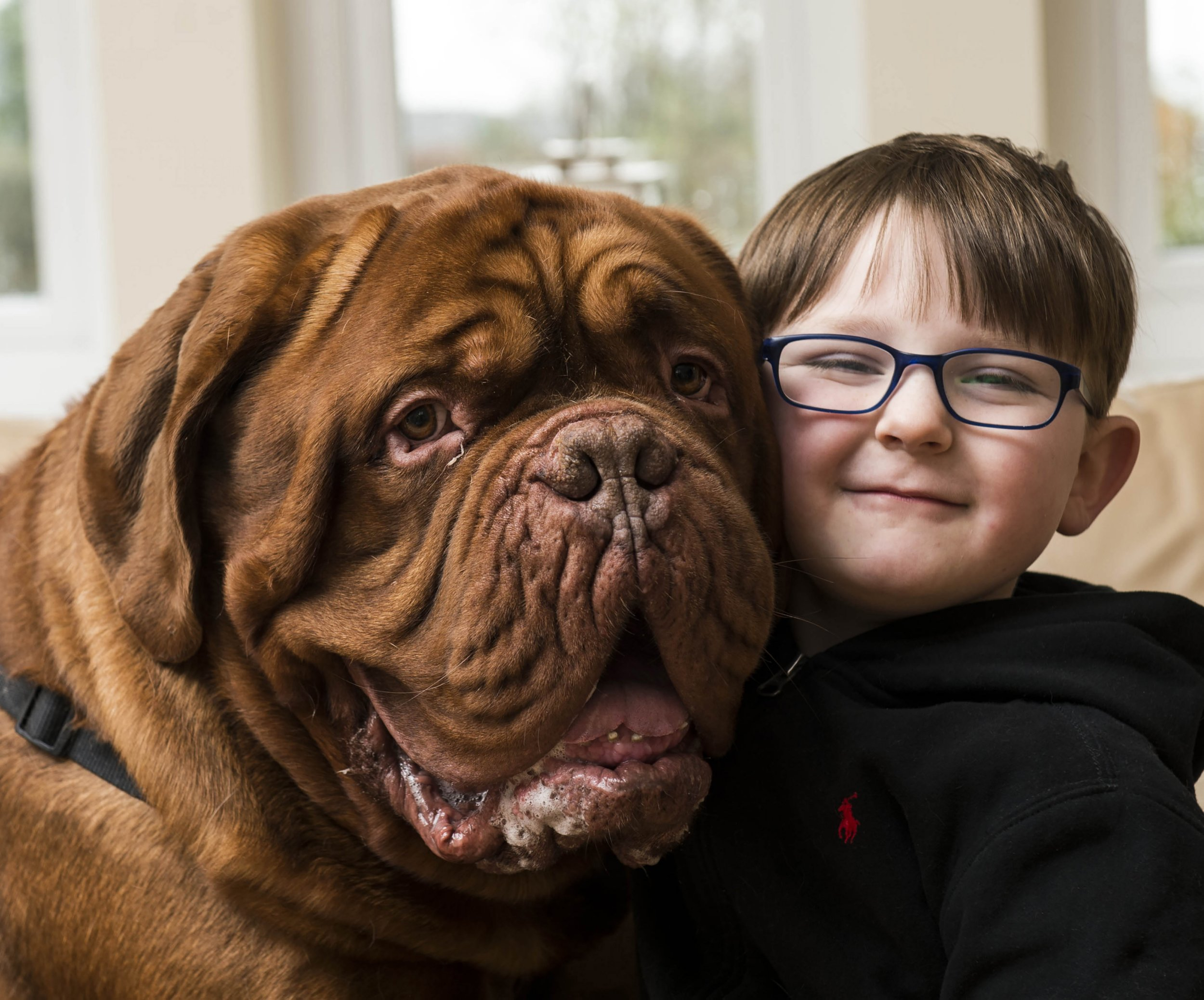 PIC BY CHRISTIAN COOKSEY/MERCURY PRESS (PICTURED: MARK CANNON, 5, WITH HIS DOGUE DE BORDEAUX, ALFIE) The parents of a visually-impaired youngster believe their huge family DOG saved their son from going BLIND ñ by showing them he had a dangerous condition with his eyes. Mark Cannon, five, and his 13-STONE pet Alfie have been inseparable since he was born but his family could never explain why the dog always walked on Markís right. Despite being baffled by Alfieís unusual habit, the family had Markís eyes checked and a school optometrist diagnosed him with astigmatism in his right eye last April ñ meaning he was almost blind in that eye. It was then Mark's mum and dad Sharlene and Mark Snr, both 42, realised the giant Dogue de Bordeaux always stood to his right in a bid to act as a guide. Eye doctors told the family Mark could have gone completely blind if they had not caught the condition when they did. And Alfie even used his doctor's instinct to sniff out cancer in the familyís other Dogue de Bordeaux Cass, who sadly died last month aged 11. SEE MERCURY COPY