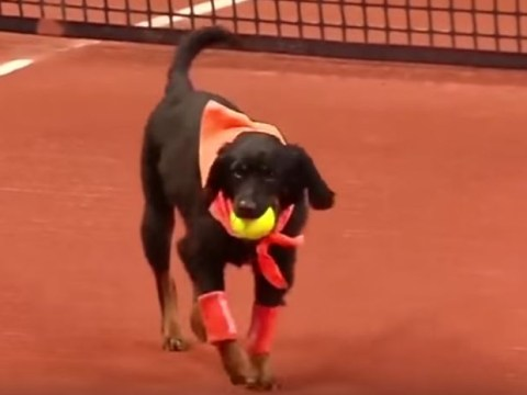 Strays given new lease of life as 'ball dogs' at Brazil Open