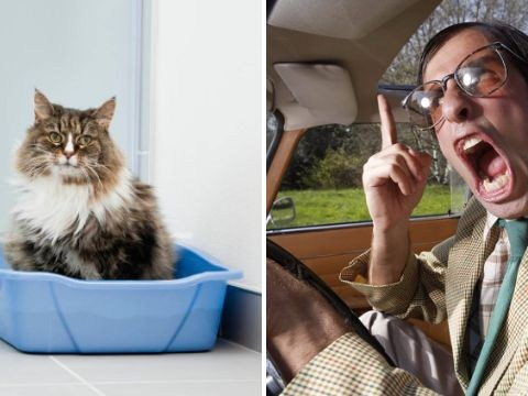 If you get road rage you may have a bug found in cat poo