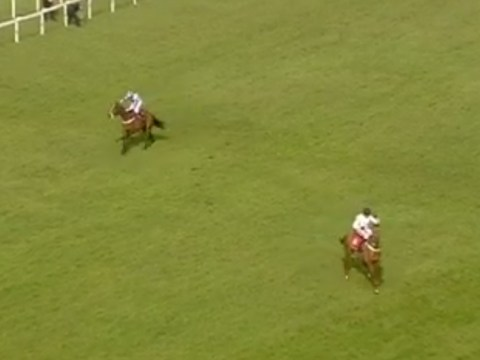 Punters lose heads as What's The Scoop abandons certain win at last-minute
