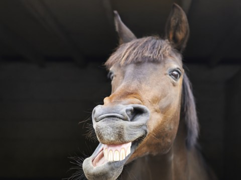 15 things you probably didn't know about horses
