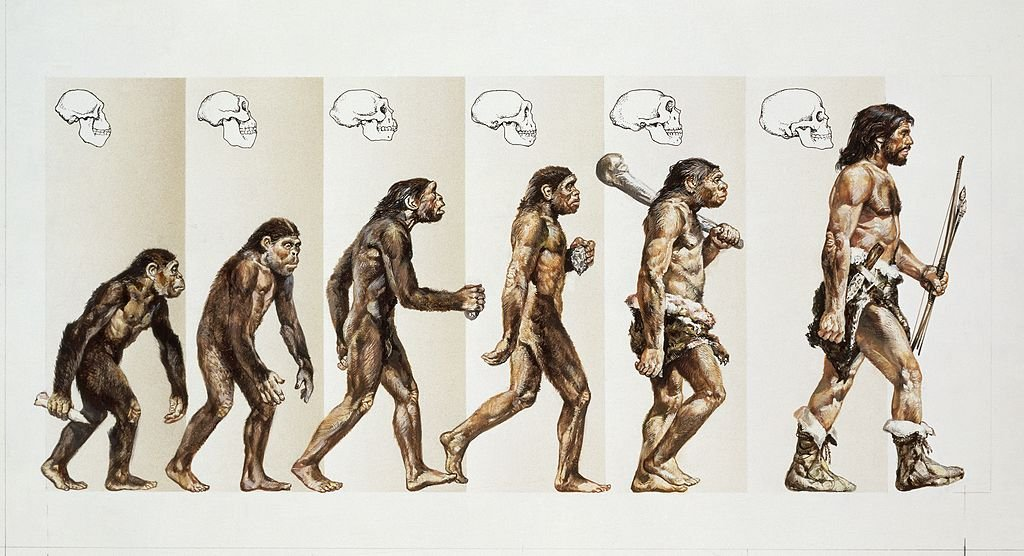 UNSPECIFIED - CIRCA 1900: Prehistory - Hominid evolution through time. Drawing. (Photo By DEA PICTURE LIBRARY/De Agostini/Getty Images)
