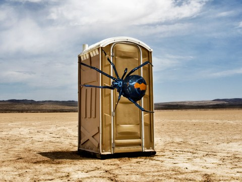 Man bitten on the penis by venomous spider in portable toilet