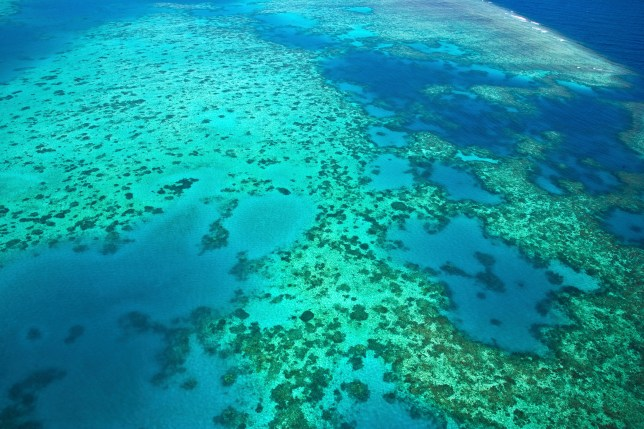 Aerial view of The Great Barrier Reef, Queensland, Australia Picture: Getty Images
