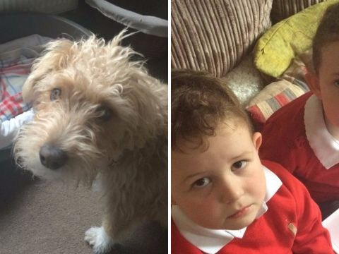 Dad pulls totally unforgivable April Fools' pranks on his two kids AND dog