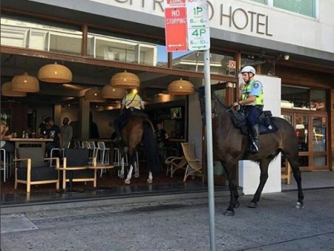 Heard the one about a police horse walking into a bar?