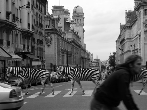 This is what happens when animals go wild in the city (with the help of Photoshop)