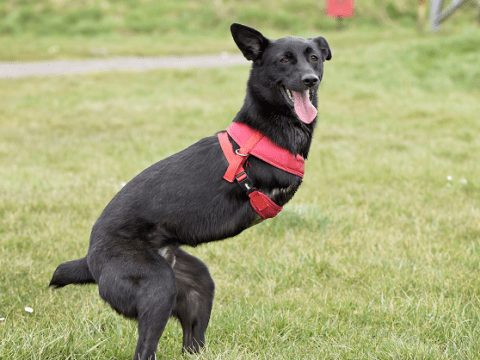 Roo, the two-legged dog will give you all the Monday motivation you need